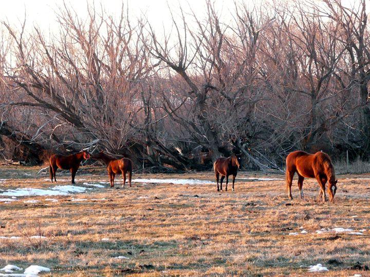 Kissing Horses - Brian Shaw