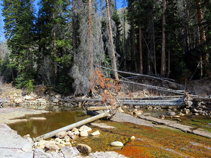 Deadfall on the Upper Provo River - Brian Shaw