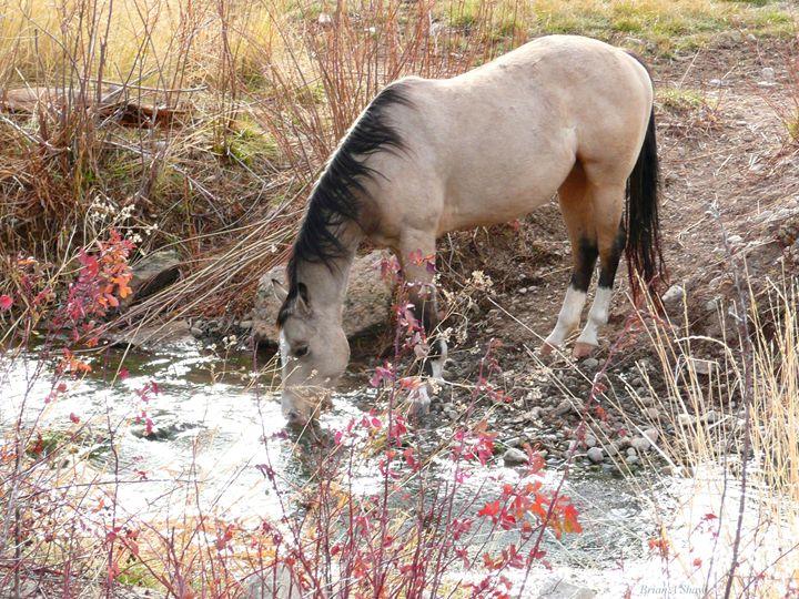 Horse Drink - Brian Shaw