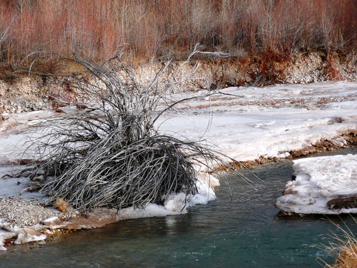 Winter Willow - Brian Shaw