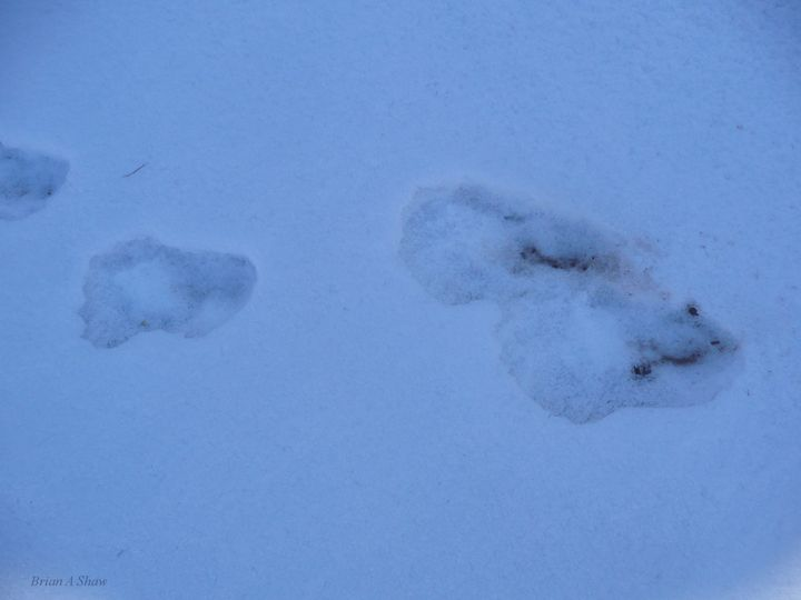 BigFoot Prints in Snow - Brian Shaw