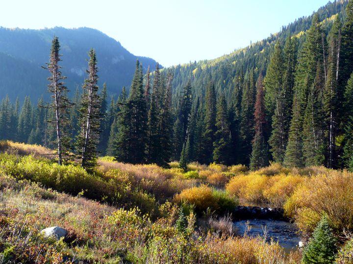 Mountain meadow stream at Dawn - Brian Shaw