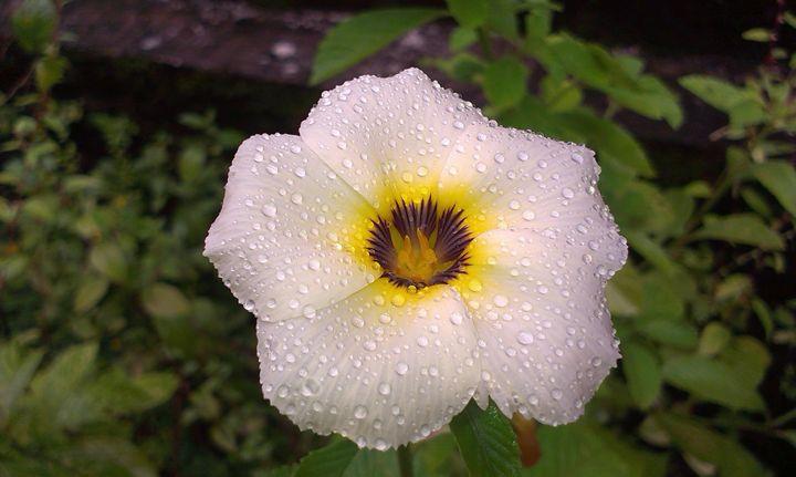 Monsoon Flower - Gallery Perumpally