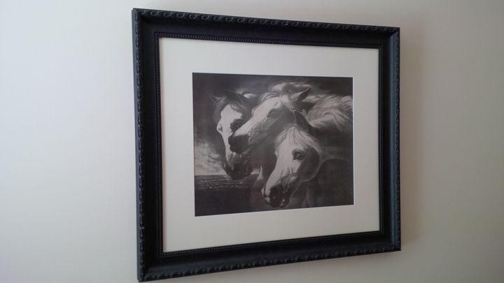 Pharoah's Arabians - Arabian horses
