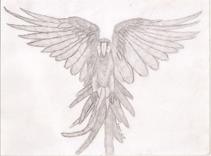 Scarlet macaw in flight - Merrin's Art