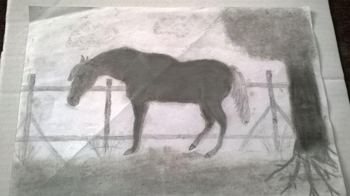 horse - adam