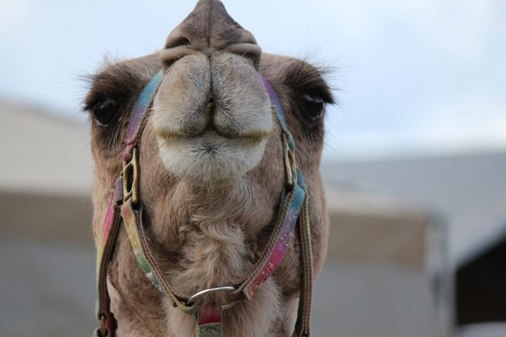 Camel One - JCochran