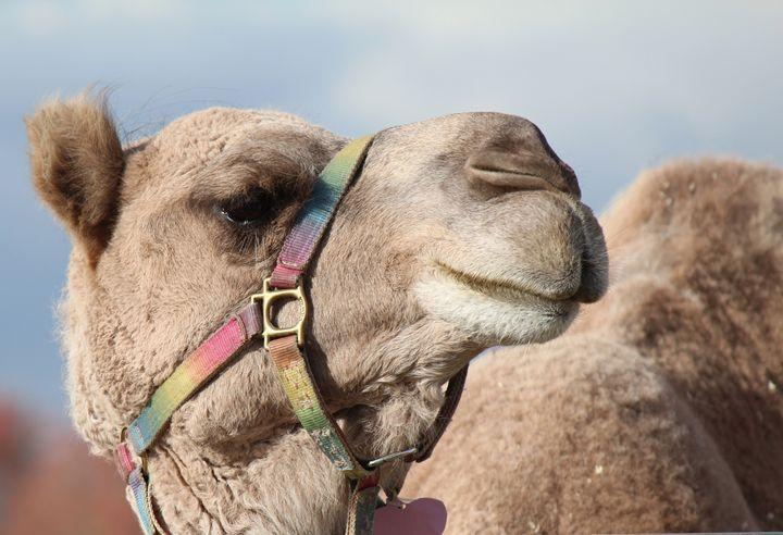 Camel two. - JCochran