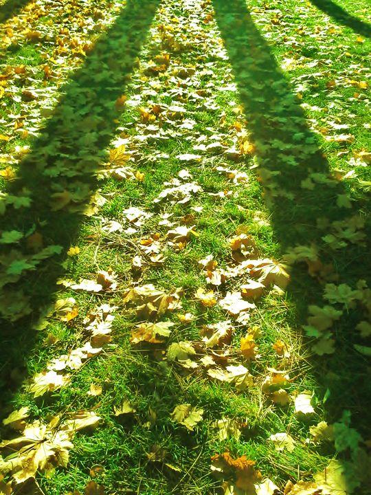 Fall Light of Spokane - Jenny Penny
