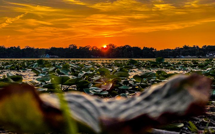 Sunset over Lily pads - Dan Dunn   DRD.images