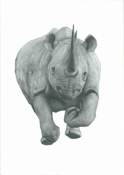 Charging Rhino - Richard Colvin