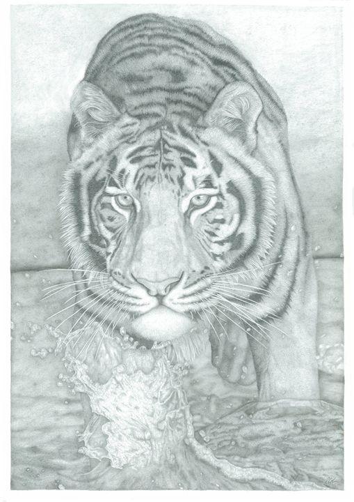 Tiger Through Water - Richard Colvin