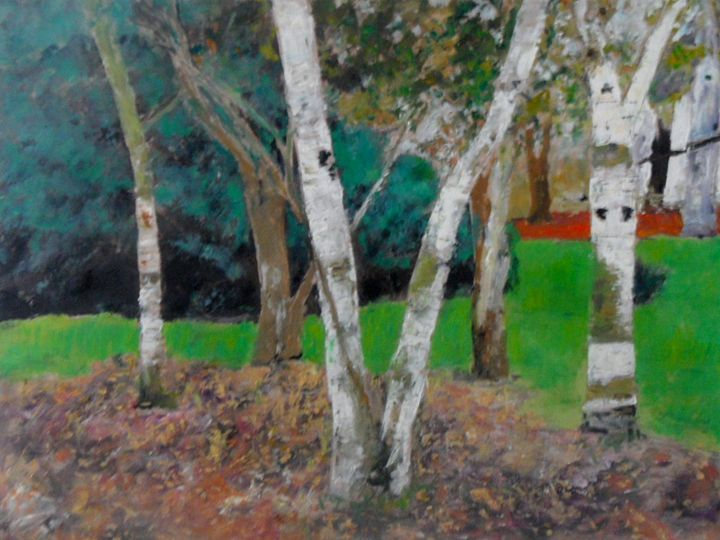 Birch Trees - Riverview Gallery