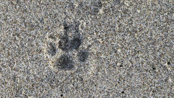 Sand paws - Missygirl