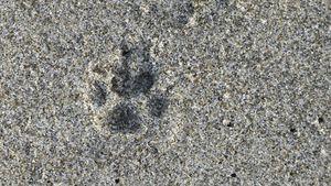 Sand paws