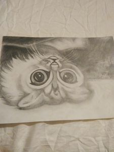 Upside-Down Kitty