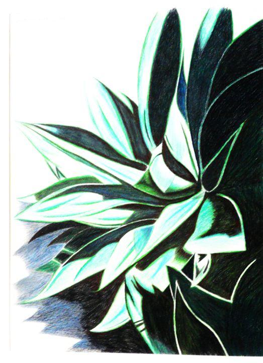 Agave Attenuata # 3 - www.Artpal.com/alphacortius