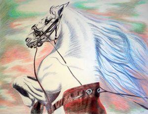 Lipizanner Horse # 1