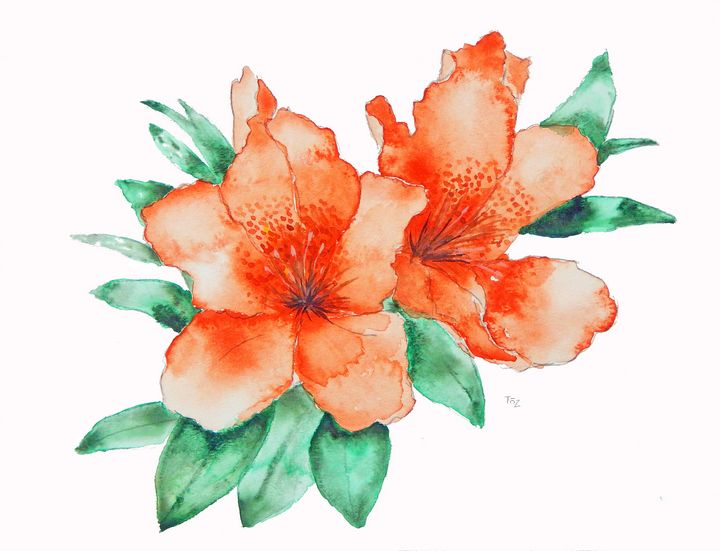 Orange Rhododendron Flower - Toz