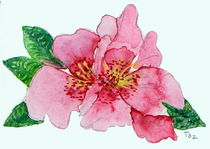 Little Pink Flower - Toz