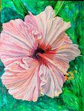 Huge hibiscus bloom