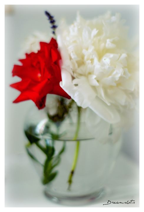 Rose and Peony  in a vase - Dreamshots  Art and Photography