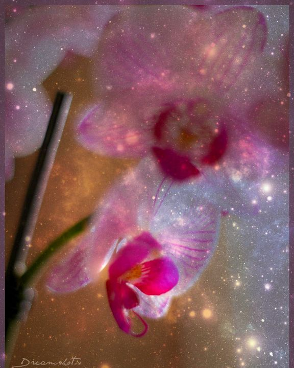 Stars and Orchids - Dreamshots  Art and Photography
