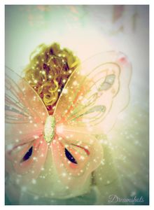 Her Wings Digital photography