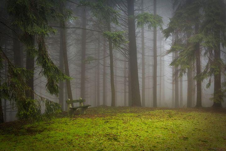 Pine - Best Offers