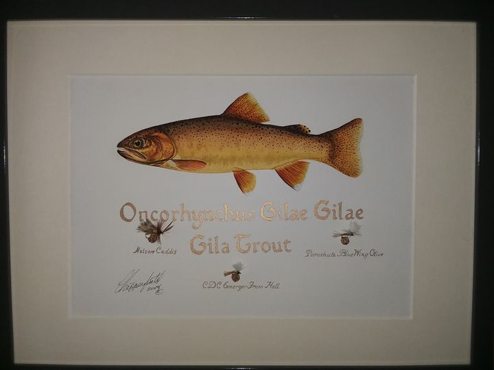 The Gila trout - The art of the Chip
