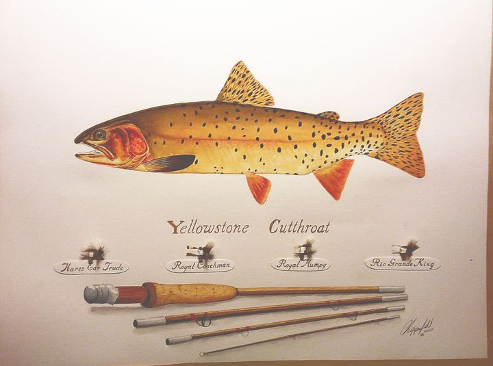 Yellowstone cutthroat - The art of the Chip