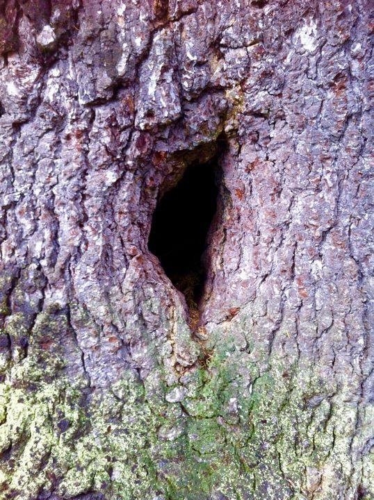 Shamanic Journey Opening in Tree - Maggie Yowell Wilson