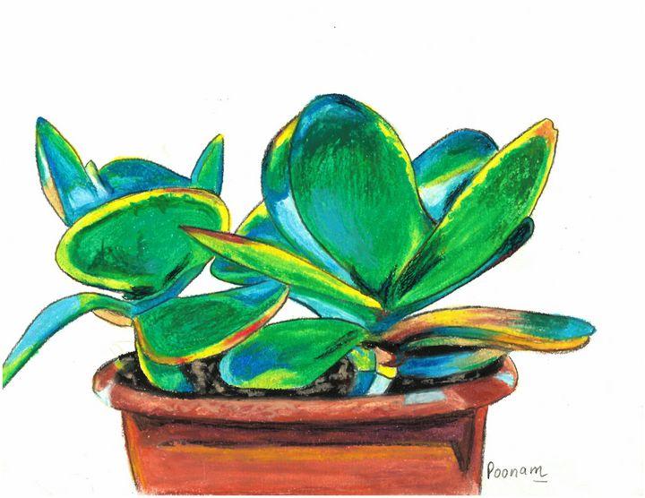 Paddle Plant-Kalanchoe thyrsiflora - Poonam Singh's Art