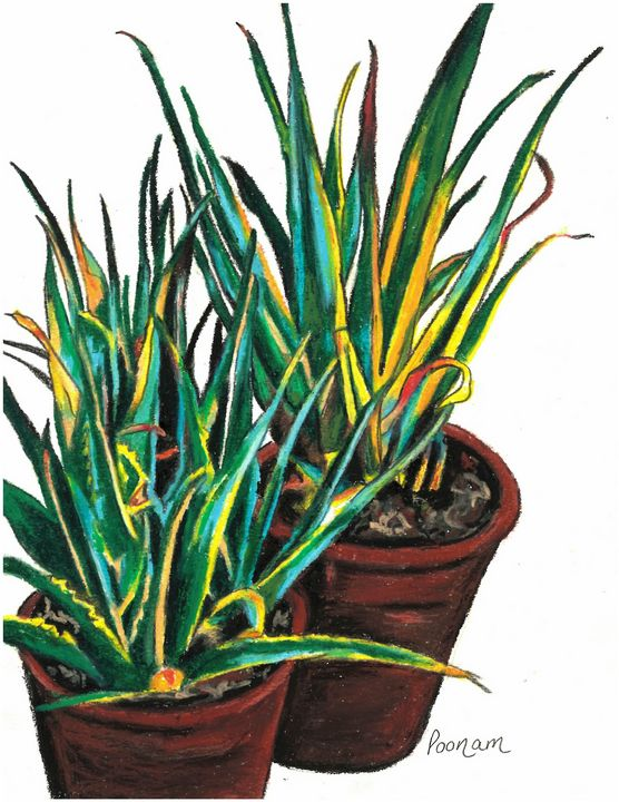 Aloe Vera Pots - Poonam Singh's Art