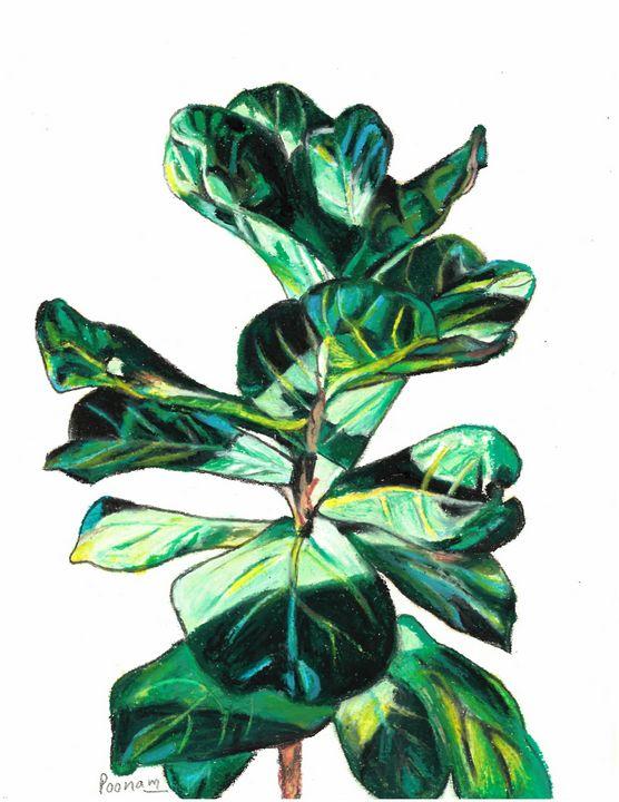 Fiddle Leaf Fig-Ficus lyrata - Poonam Singh's Art