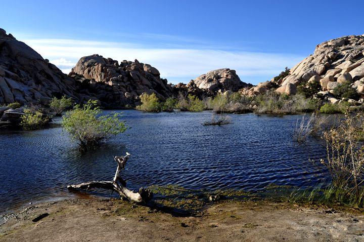Desert Lake - Lubit Arts