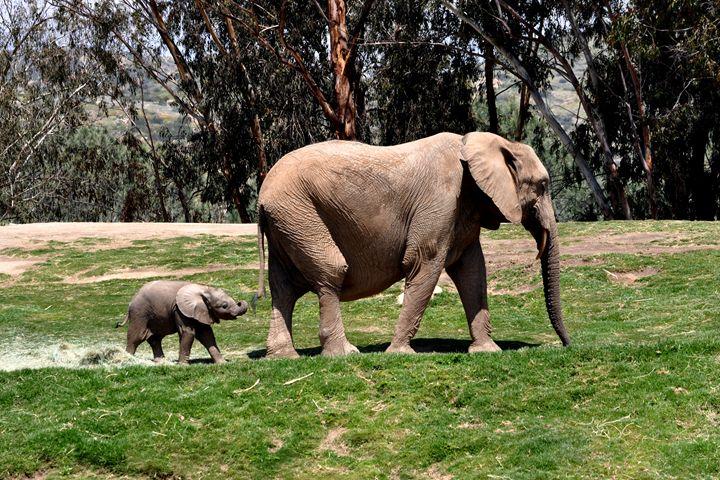 Elephants Go Marching - Lubit Arts