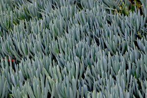 Cacti Impression