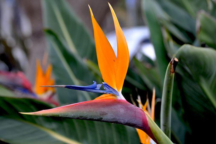 Pretty Bird - Lubit Arts