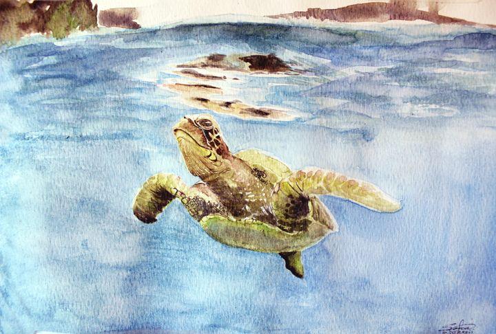 Sea Turtle - Sara XXII