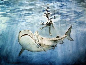 Shark & Man