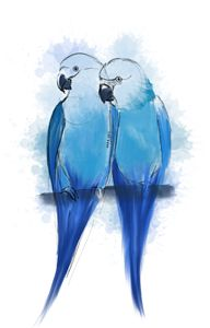 Pair of Spix Macaw