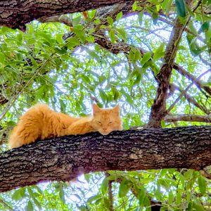 Resting branch