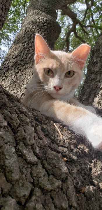 Kitten restful eyes - Chiri