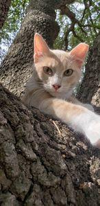 Kitten restful eyes