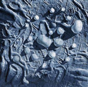 Роса на астероиде - Ridik