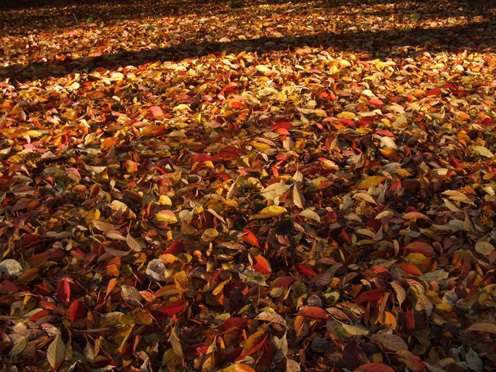 autumn carpet - artansoul