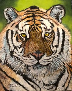 Tiger Portrait - Colors of the Wind