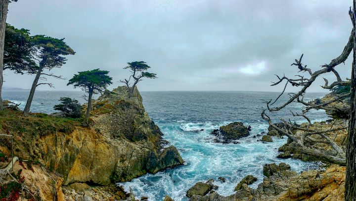 Lone Cypress - Laurie Ann Marshall