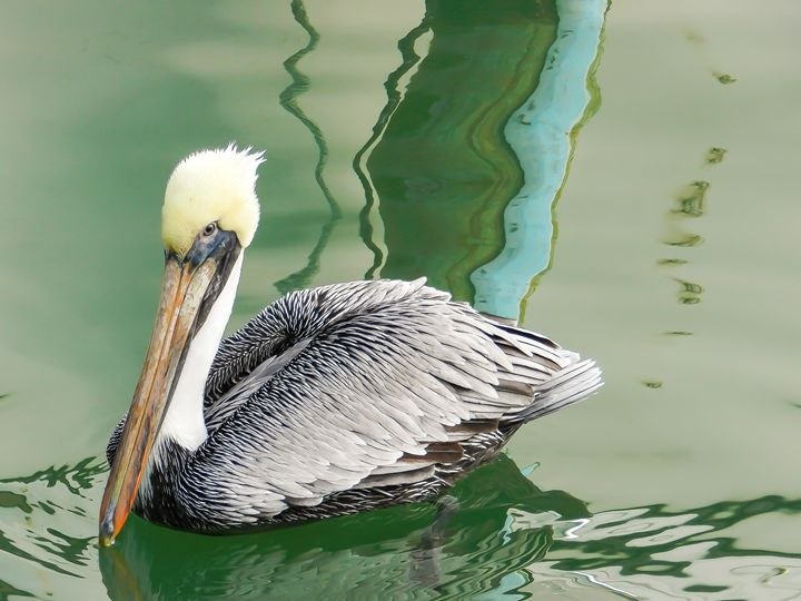 Pelican Crossing - David Scott